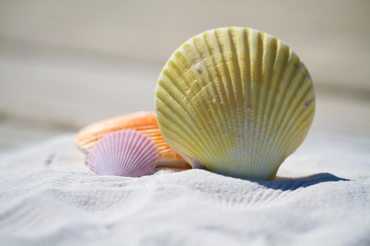 shells-792912_1280 Kopie